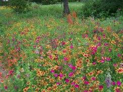 RNC meadow spring.SusanSander